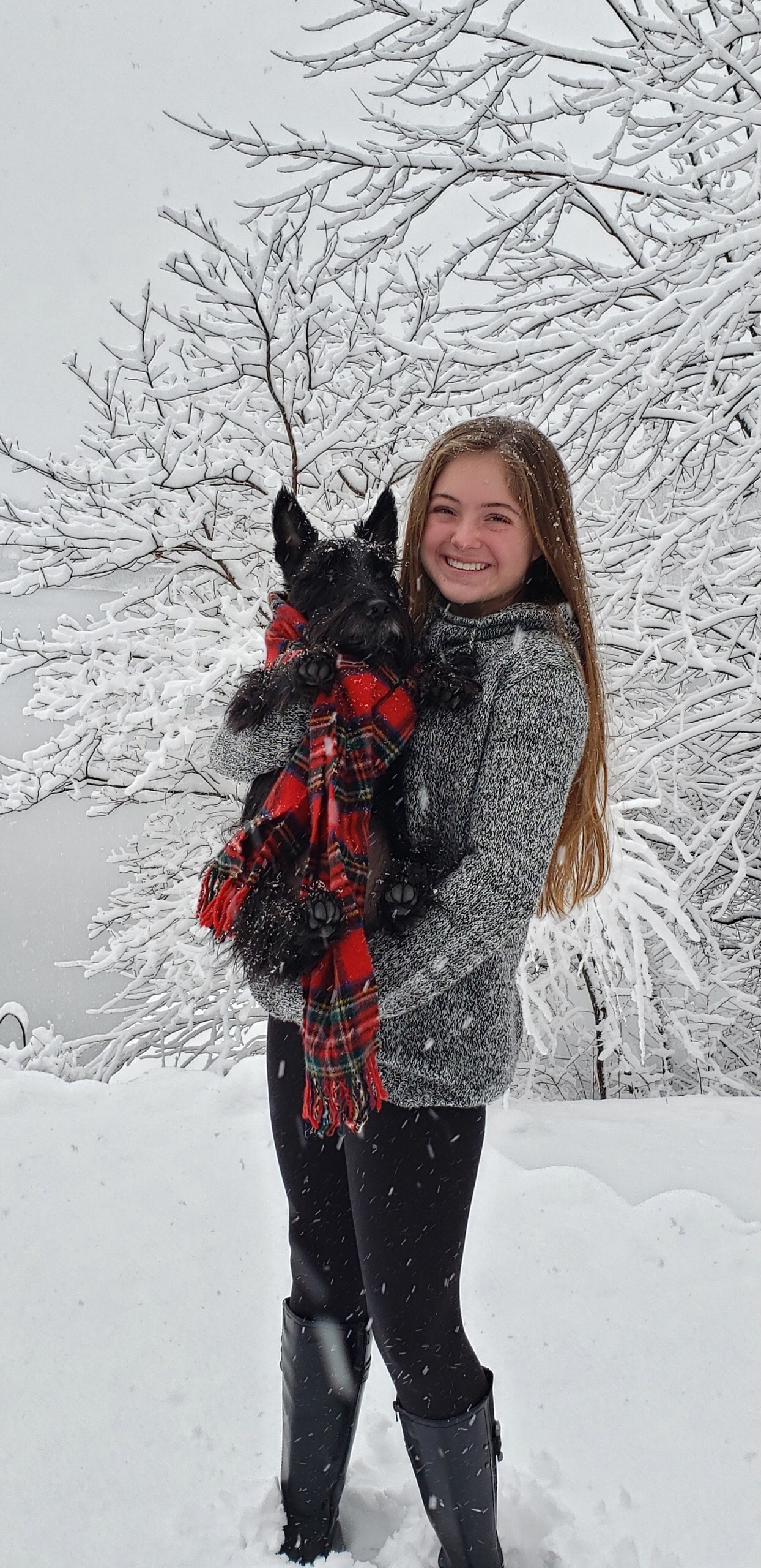 Scottish Terrier Club of Greater NY Rescues are Pretty in Plaid!