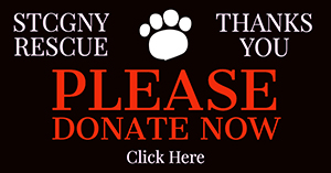 Please donate now to help us rescue Scottish Terriers