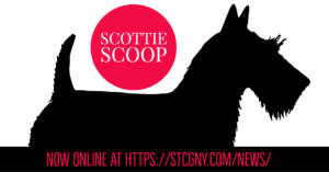 Scottish Terrier Club of Greater NY News_The Scottie Scoop