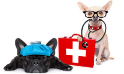 Emergency rescue for your dog