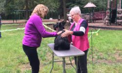 Scottish Terrier Club of Greater New York match show is good practice