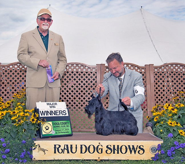 Scottish Terrier Glenn EyrieYou Be U at Kingsdaale is Winners Bitch, with Geoff Dawson, professional handler