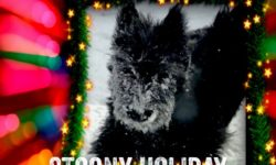 Scottie puppy in snow with holiday lights