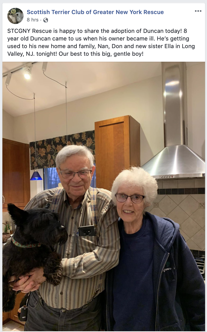 Happy new forever home for 8 year old Scottish Terrier
