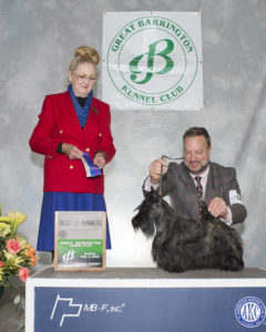 Kingsdale Scottish Terrier is Best of Winners at Great Barrington Kennel Club Dog show 02-02-2020