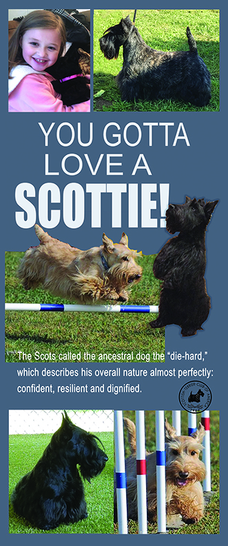 Scottish Terriers are beautiful and great at sports, friendship!