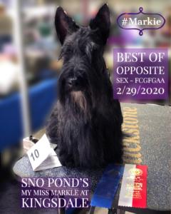 Kingsdale Scottish Terrier is Best of Opposite Sex Feb 29_2020