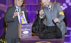 CH Ceilidh's Corryvreckan of the Royal Dragoons wins Best of Breed at Westminster